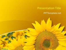 0029-sunflower-ppt-template-1