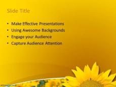 0029-sunflower-ppt-template-2