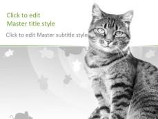 10031-02-cat-ppt-template-1