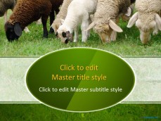 10060-02-sheeps-in-a-field-ppt-template-1