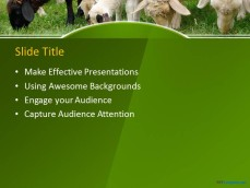10060-02-sheeps-in-a-field-ppt-template-2
