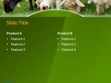 10060-02-sheeps-in-a-field-ppt-template-4