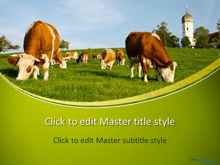 free cows ppt template, Powerpoint