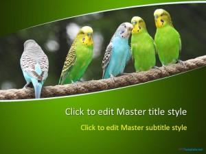 Free Parrots PPT Template